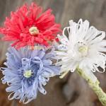 fiori uncinetto, schema fiori uncinetto, tutorial fiori, fiori con i petali, petali fiori uncinetto,uncinetto, lavorazione in tondo, margherite uncinetto,