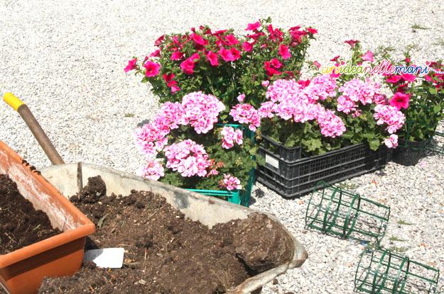 vasi di fiori, fiori, vasi terracotta,